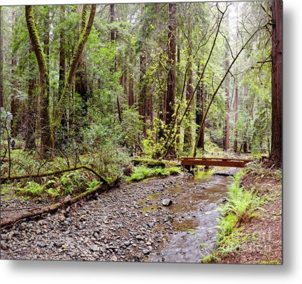 Redwood Creek Flowing Through Muir Woods National Monument - Mill Valley Marin County California Metal Print