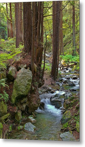 Redwood Stream Metal Print by Arthurpete Ellison