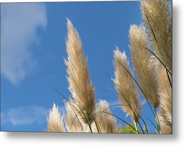 Reeds Against Sky Metal Print