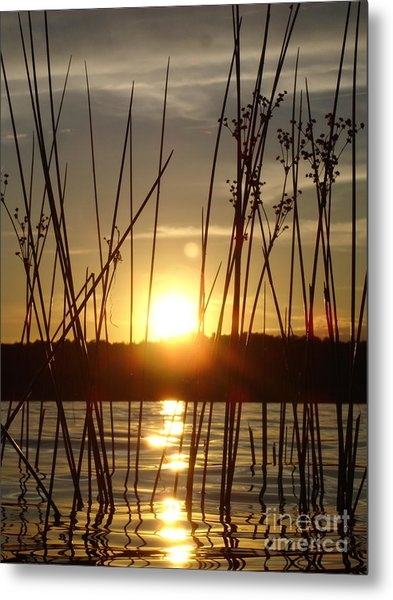 Reeds In A Lake Metal Print by Chad Natti