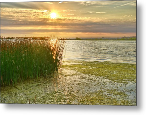 Reeds In The Sunset Metal Print