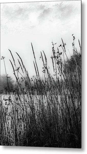 Reeds Of Black Metal Print