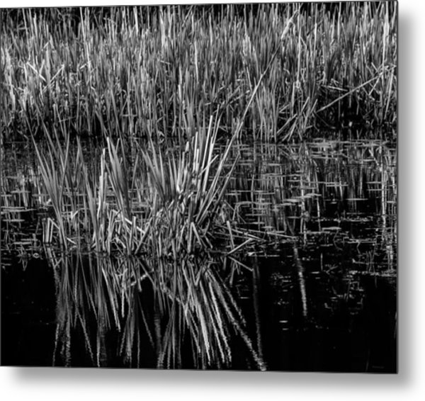 Reeds Reflection  Metal Print