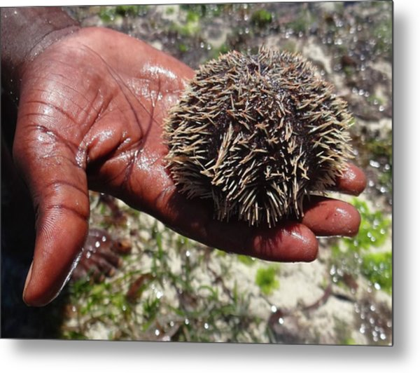 Reef Life - Sea Urchin 3 Metal Print