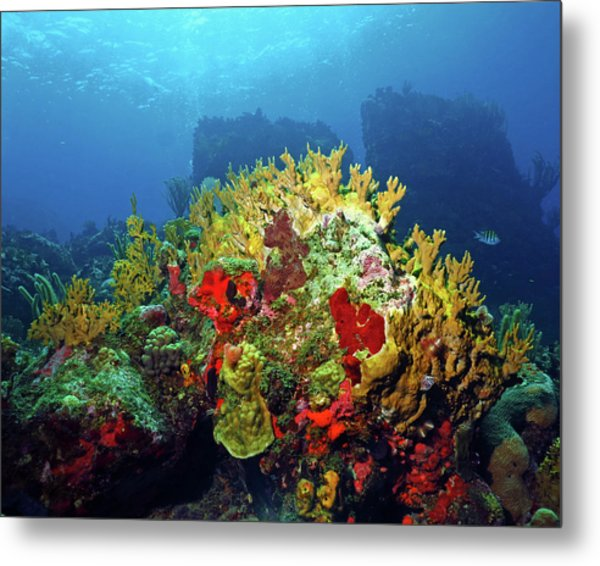 Reef Scene With Divers Bubbles Metal Print