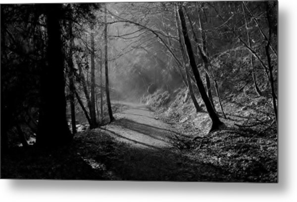 Reelig Forest Walk Metal Print
