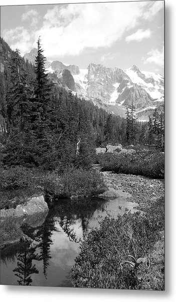 Reflected Pine Metal Print