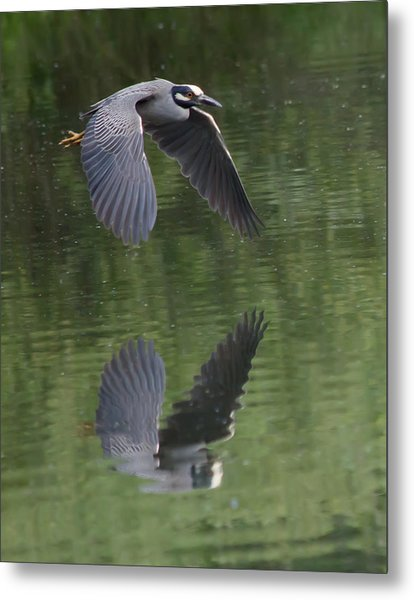 Reflecting On Flight Metal Print