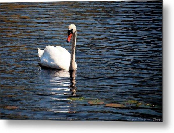 Reflecting Swan Metal Print