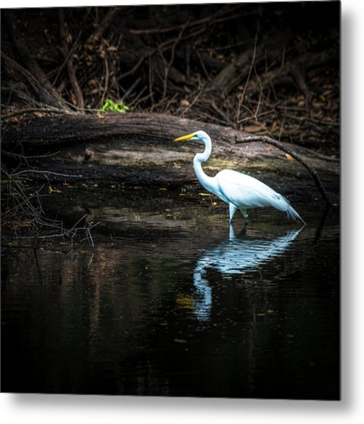 Reflecting White Metal Print