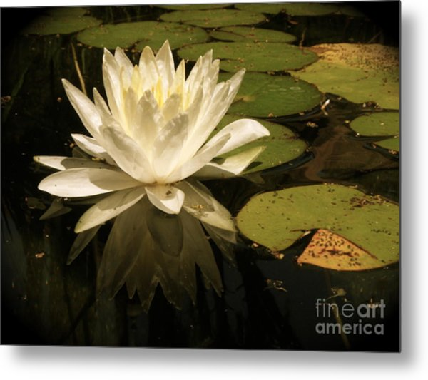 Reflection Metal Print by Amy Strong