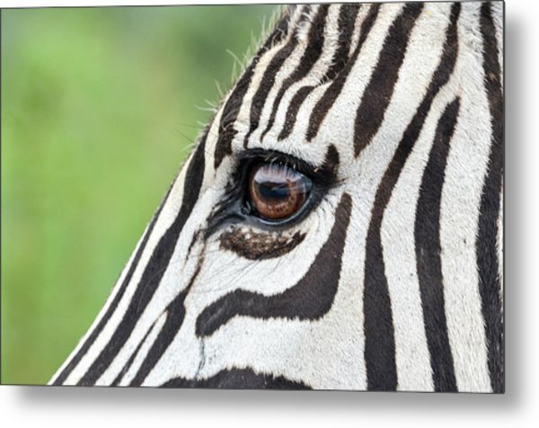 Reflection In A Zebra Eye Metal Print