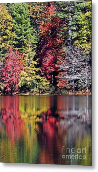 Reflections Of A Bare Tree Metal Print