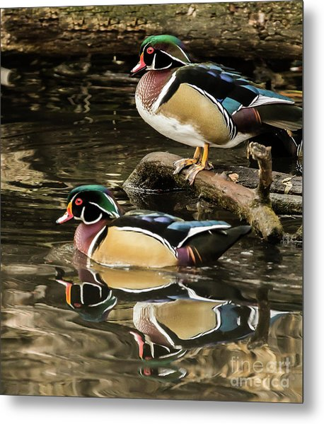Reflections Of You And Me Wildlife Art By Kaylyn Franks Metal Print