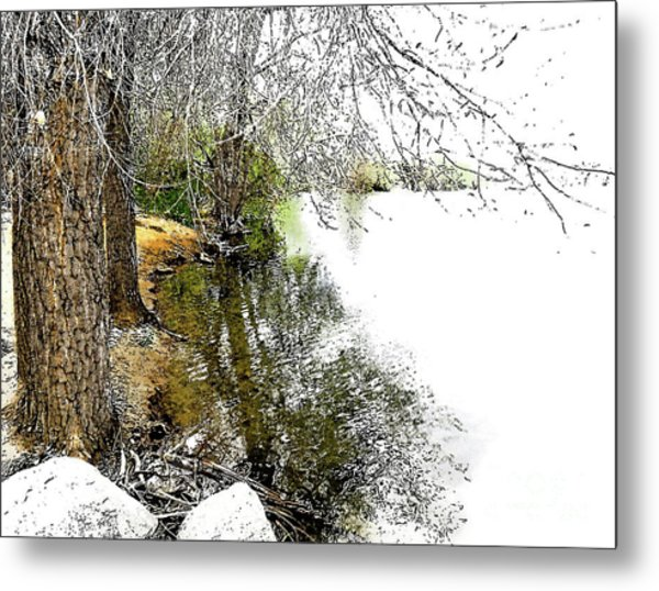 Reflective Trees Metal Print