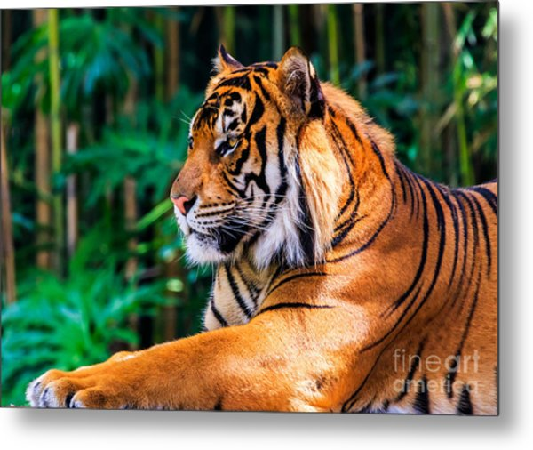 Regal Tiger Metal Print