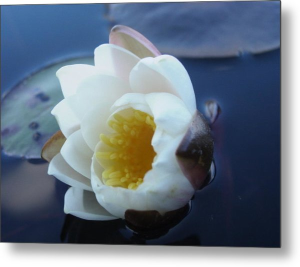 Relaxing In The Pond Metal Print