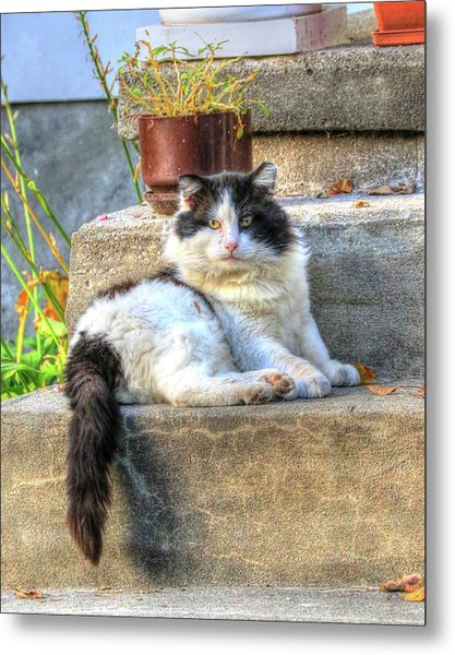 Relaxing On The Stairs Metal Print