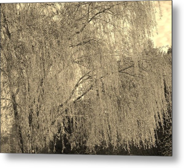 Remember Our Willow Metal Print