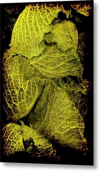Renaissance Chinese Cabbage Metal Print