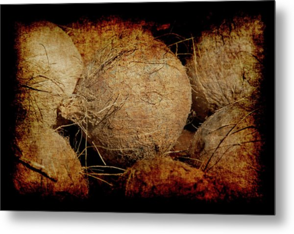 Renaissance Coconut Metal Print