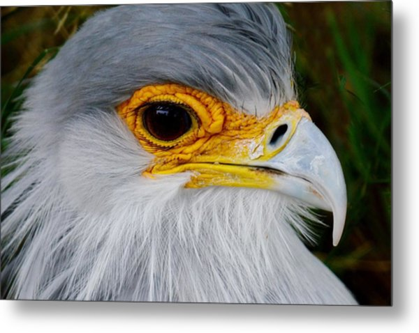 Reptile Hunter - Secretary Bird Metal Print