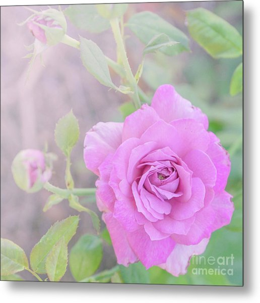 Metal Print featuring the photograph Resilient Rose by Cindy Garber Iverson