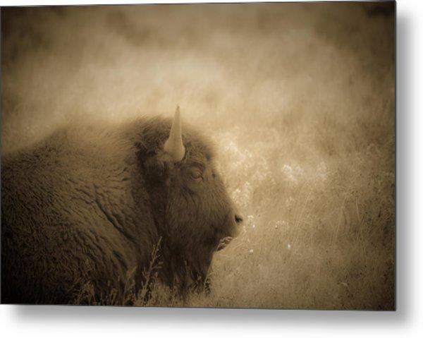 Resting Buffalo Metal Print by Patrick  Flynn