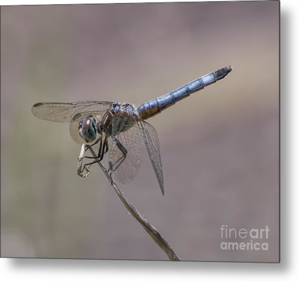 Resting My Wings Metal Print