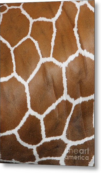 Reticulated Giraffe #2 Metal Print
