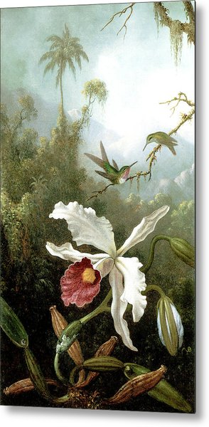 Retouched Masters - Orchid And Hummingbirds In Tropical Forest Metal Print