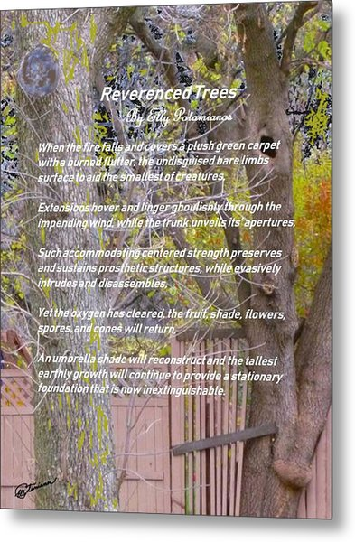 Reverence Of Trees Metal Print