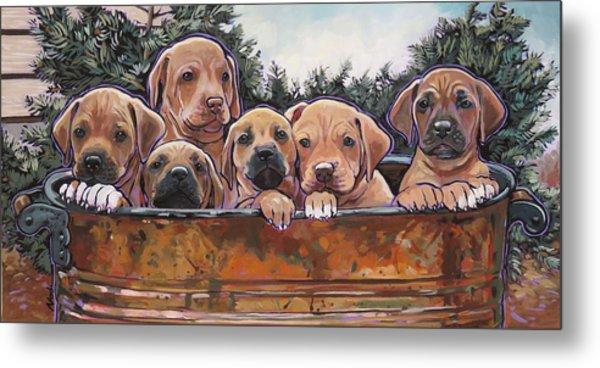 Rhodesian Ridgeback Puppies Metal Print