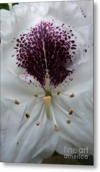Rhododendron 2 Metal Print
