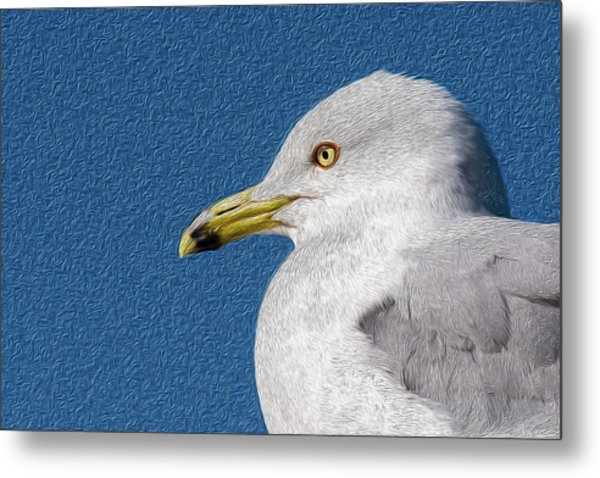 Metal Print featuring the mixed media Ring-billed Gull Oil Portrait by Onyonet  Photo Studios