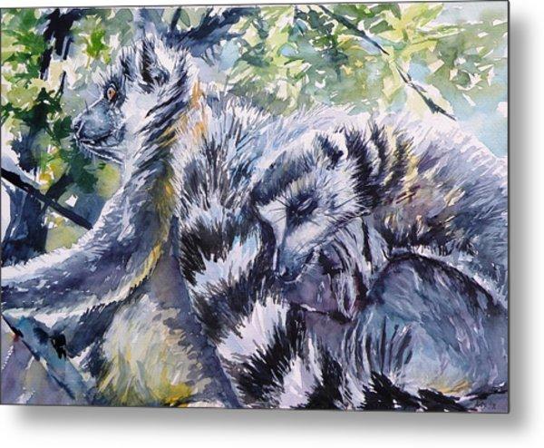 Ring-tailed Lemurs 13 Metal Print