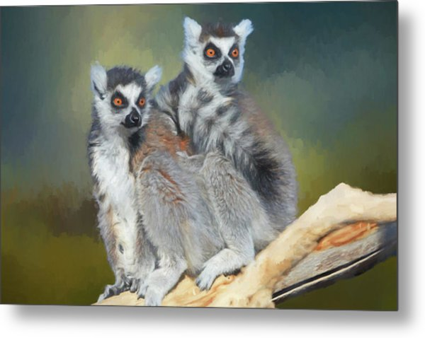 Ring-tailed Lemurs- Sedona And Verde Metal Print