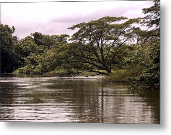 Riparian Rainforest Canopy Metal Print