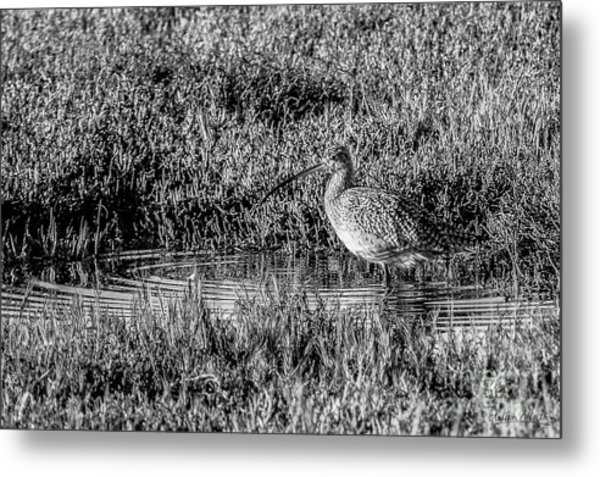 Camouflage, Black And White Metal Print
