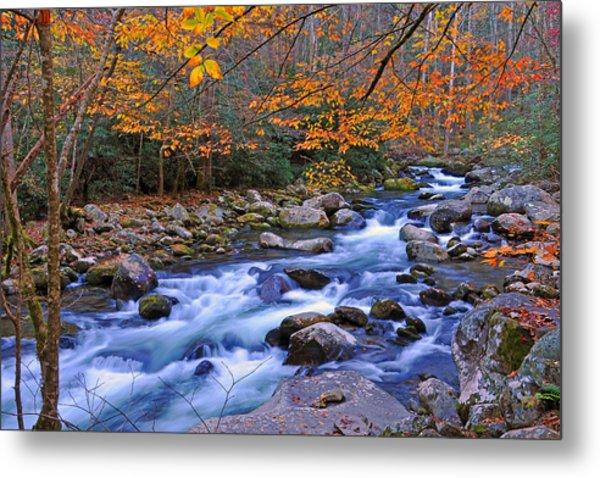 River Birch Overhangs Big Creek Metal Print