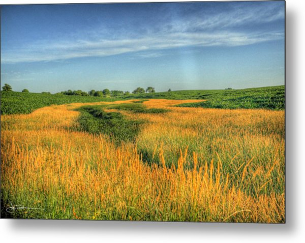River Of Grass Metal Print