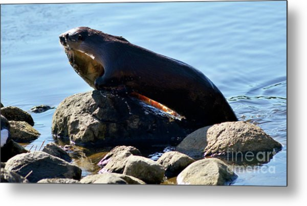 River Otter And Catch Of The Day Metal Print by Terry Elniski