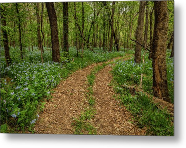 Road Through The Woods Metal Print by Scott Bean
