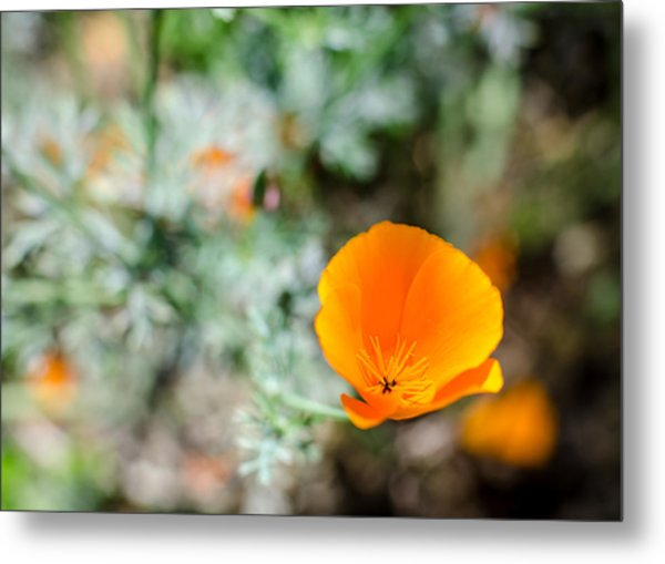 Roadside Beauty Metal Print