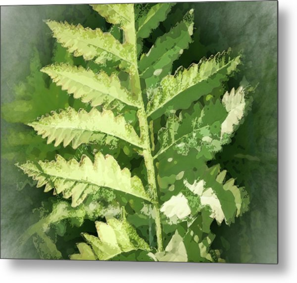 Roadside Fern, Abstract 2 - Metal Print