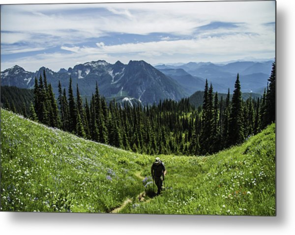 Roaming Above The Trees. Metal Print
