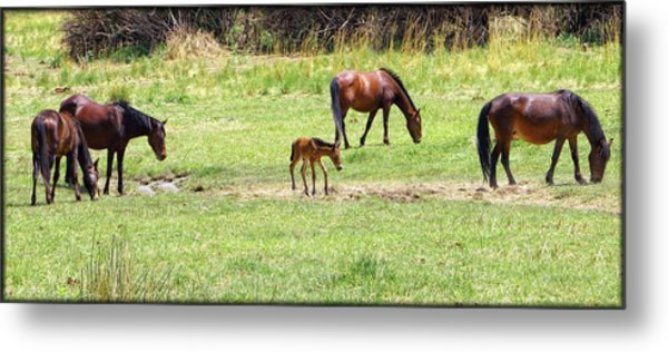 Roaming Freely Metal Print