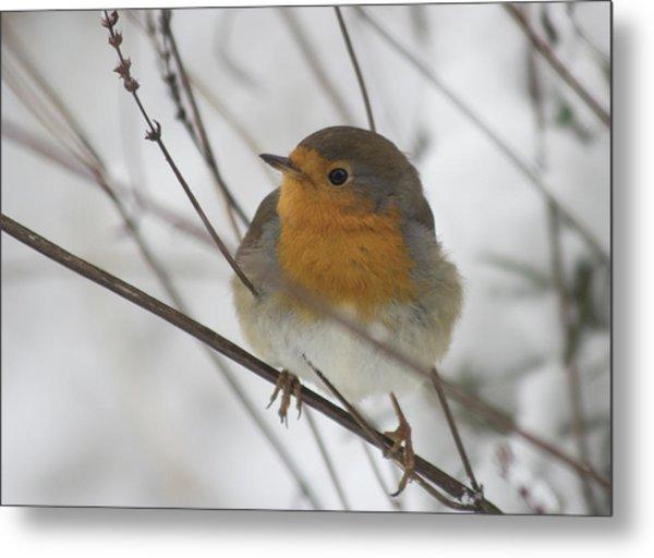 Robin In The Snow Metal Print