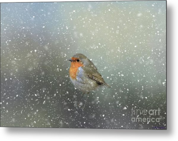 Robin In Winter Metal Print