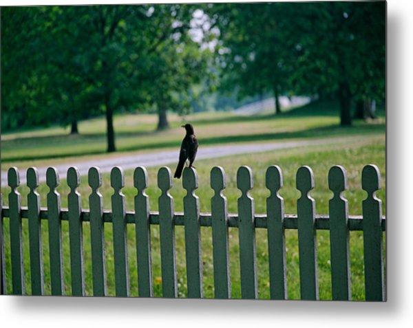 Robin On A Fence Metal Print by Lone Dakota Photography